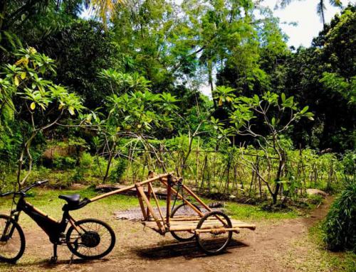 EWABI and Green School